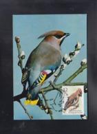 REPUBLIC OF MACEDONIA, 2004, CARTE MAXIMUM, MICHEL 329 - BIRDS-BOMBYCILLA GARRYLUS - Passeri