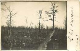 231019 - CARTE PHOTO GUERRE 1914 18 - AVOCOURT Le Bois - Bataille De Verdun - Other Municipalities