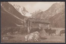 CPA  Suisse, VAL D'ARPETTE, Et Point D'Orny, Vaches -  Carte Photo. - VS Valais
