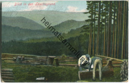 Friedrichroda - Blick In Den Lauchagrund - Verlag W. Zinke Friedrichroda - Friedrichroda