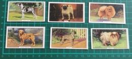 6 X Dogs Gallaher (Second Series) Cards ~ Great Dane, Golden Labrador, Japanese, Boxer, Pug & Pomeranian - Gallaher