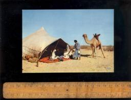 République Islamique De MAURITANIE : Méhariste Dans Le Désert Chameau Camel Vie Nomade Campement Tente - Mauritania