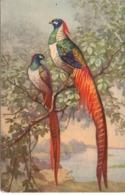 Faisans Sur Branche - Birds