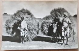 Sudan Donkey Loads Og Hay 1966 - Sudan