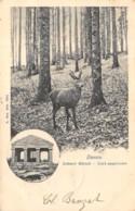 Donon - 1902 - Zahmer Hirsch - France