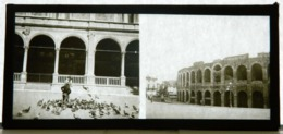 Plaque De Verre - 2 Vues - Italie - Venise - Colisée - Cathédrale - Pigeons - Animée - Glass Slides