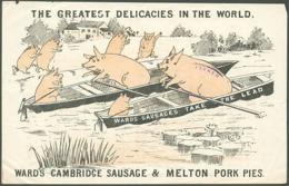 @@@ MAGNET - Wards Sausages, Rowing - Advertising