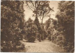 W5331 Roma - Viale Romania - Istituto Pio XII Delle Religiose Dell'Assunzione - Il Parco / Viaggiata 1954 - Enseignement, Ecoles Et Universités