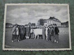 HUY - ECOLE D'AGRICULTURE - Leçon De Zootechnie - Hoei