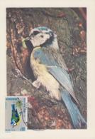 Carte  Maximum  1er  Jour  ANDORRE   Protection  De  La  Nature  : Oiseau  :  La  Mésange  Bleue  1973 - Maximumkarten (MC)