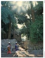 (ED 36) Postcard - Oman Sultanate - Nakhi - Oman
