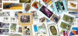 BID Africa-Br. Commonwealth Africa KILOWARE MissionBag 1 KG (2LB-3oz) +higher Values Stamp Mixture - Stamps