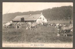 Carte P De 1908 ( Autour Du Chalet ) - VD Vaud