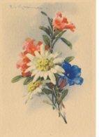 CPA GF -15047 --Illustrateurs - Motif Floral  Par  Catharina Klein -Envoi Gratuit - Klein, Catharina
