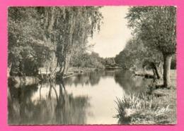 CPSM FRANCE 27  ~  IVRY-LA-BATAILLE  ~  21304  La Baignade Et Les Bords De L'Eure  ( Estel Dentelée 1958 ) - Ivry-la-Bataille