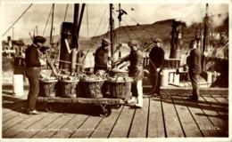UNLOADING HERRING, MALLAIG - Pesca