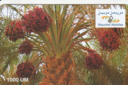 Mauritania - Mauritel - Date Palm - Mauritanie