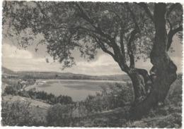 W5399 Enna - Largo Pergusa - Panorama / Viaggiata 1953 - Enna