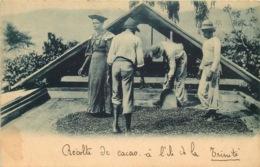CARAIBES  ILE DE LA TRINITE  Recolte De Cacao - Cartoline