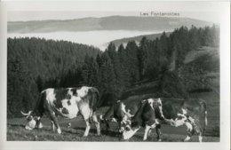 25 .20073 .les Fontenottes .la Vallee .les Vaches . - Autres Communes