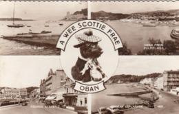 OBAN - A WEE SCOTTIE FRAE, Fotokarte Gel.1962 - Schottland