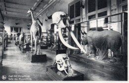 TERVUREN-MUSEUM VAN BELGISCH CONGO - Tervuren