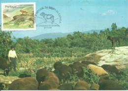Carte Maximum - Portugal - Cão Serra Da Estrela - Chien De Montagne De Berger - Dog - Tarjetas – Máximo