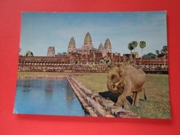 Asie Cambodge  Siemreap Elephant Domestique Se Promenant Près D'Angkor-Vat - Cambodja