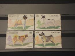 LESOTHO - 1999 CANI 4 VALORI -  NUOVI(++) - Lesotho (1966-...)