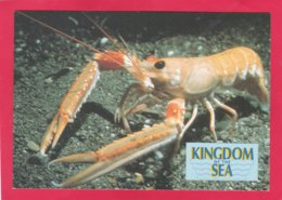 Modern Post Card Of Dublin Bay Prawn,X24. - Fish & Shellfish