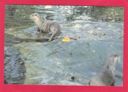 Modern Post Card Of The New Forest Otter,X25. - Other
