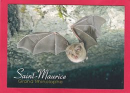 Modern Post Card Of Grand Rhinoloph.Bat,France,X25. - Tierwelt & Fauna