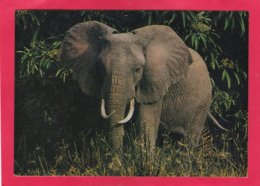 Modern Post Card Of Elephant,X25. - Elephants