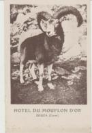 Zouza ( Zoza ) Hotel Du Mouflon D'or - France