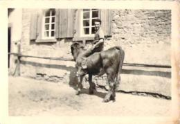Photo - Homme Sur Le Dos D'un Bovin, Veau Vache - Personnes Anonymes