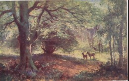 AN50 Victoria Beeches, Epping Forest - Deer - England