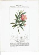Reproduction De Lithographie -Botanica-Ressia Di Grandi Fiori-Rhexia Speciosa -Li6 - Repro's