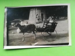 ATTELAGE  CHÈVRE ENFANTS AU PARC DE SPA UNE CARTE - PHOTO DE 1934 + 2 CARTES POSTALES CASCADE MONUMENTALE + 9 PHOTOS - Spa