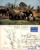 ELEPHANTS,ZIMBABWE POSTCARD - Elephants