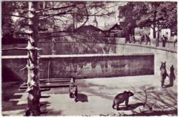 (99). Suisse Bern. Berne. Zoo. 7363 La Fosse Aux Ours. Bear Pit, Bärengraben & Fosse Aux Ours Couleur 1972 Bear - BE Bern