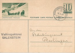 "PK 182  ""Jungfraujoch - Polarhunde""          1951 - Entiers Postaux"