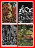 10 CPSM/gf Fleurs Et Cactus.  Botanischer Garten München-Nymphenburg. Présentation Des Cartes Au Dos...K005 - Fiori