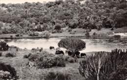 Troupeau D'éléphants à L'ombre Des Eupharbes - Éléphants