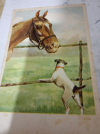 CAVALLO HORSE  E CANE DOG  ILLUSTRATA N 1950  HF1227 - Cavalli