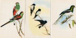 Lot De 3 Cartes Postales Sur Les Oiseaux  : Torgon Gigas, Delichon Nipalensis, Psephotus Pulcherimmus J. Gould - Birds