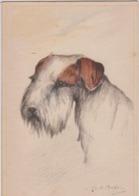 CHEINS - FOX TERRIER - Illustration De M.B Comp... ? - Dogs