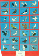 USSR 1966. Breeds Of Pigeons. 28 Match Labels. - Matchboxes