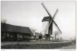 VLISSEGEM ~ De Haan (W.Vl.) - Molen/moulin - Maxikaart Van De Verdwenen Vijfwegemolen Of Dorpsmolen. TOP !!! - De Haan