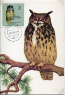 48490 Poland Maximum 1960  Owl ,   Hibou Eule, Bubo Bubo - Eulenvögel