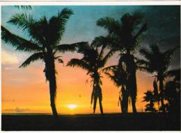 Sunset Over The Guiklf On Florida ' S West Coast ( Palmier , Coucher De Soleil - West Palm Beach